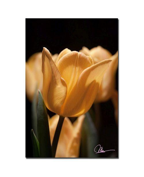 "Trademark Global Martha Guerra 'Tulips Blooms VII' Canvas Art - 24"" x 16"""