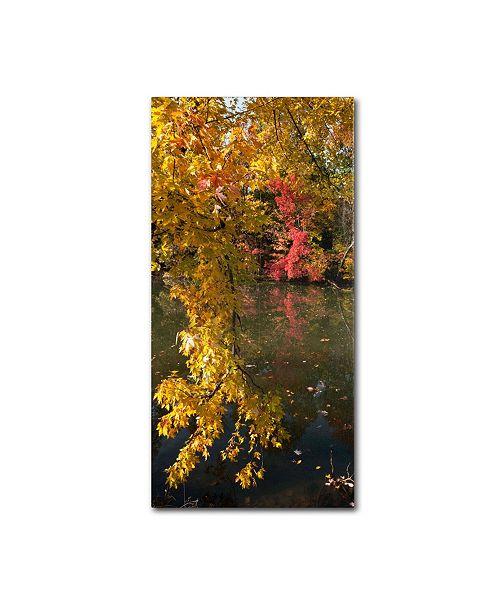 """Trademark Global Kurt Shaffer 'Autumn Branches' Canvas Art - 32"""" x 16"""""""