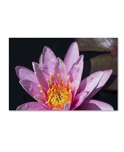 "Trademark Global Kurt Shaffer 'Pink Lotus' Canvas Art - 22"" x 32"""