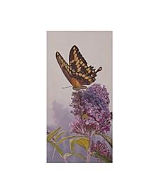 "Rusty Frentner 'Giant Swallowtail' Canvas Art - 10"" x 19"""