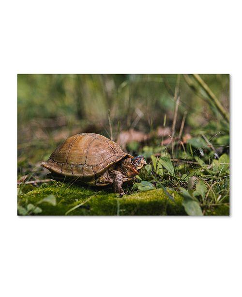 "Trademark Global Jason Shaffer 'Box Turtle' Canvas Art - 19"" x 12"""