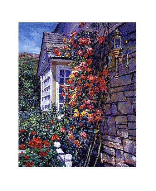 "Trademark Global David Lloyd Glover 'Magnificent Climbing Roses' Canvas Art - 32"" x 26"""