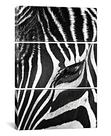 "Zebra Stare by Bob Larson Gallery-Wrapped Canvas Print - 60"" x 40"" x 1.5"""