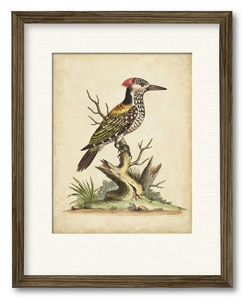 """Courtside Market Edwards Woodpecker 16"""" x 20"""" Framed and Matted Art"""