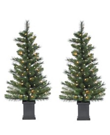 Sterling 3.5Ft. Potted Hard Mixed Needle Sycamore Spruce with 50 Clear Lights - Set of 2