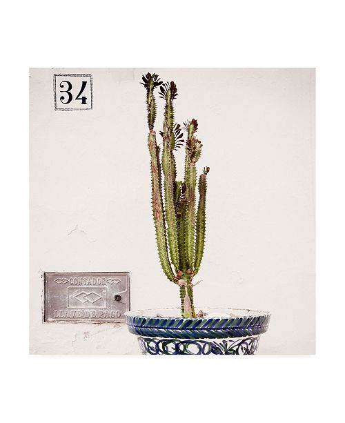 "Trademark Global Philippe Hugonnard Made in Spain 3 Spanish Terracotta Pot & Castus II Canvas Art - 36.5"" x 48"""