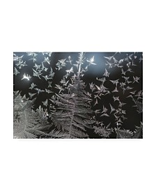 "Kurt Shaffer Photographs Ice crystal patterns on my window Canvas Art - 15.5"" x 21"""