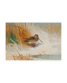 """Archibald Thorburn Snipe in the rushes, 1901 Canvas Art - 19.5"""" x 26"""""""