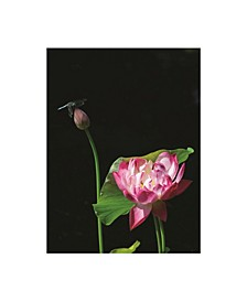 "Kurt Shaffer Lotus Dragonfly Canvas Art - 37"" x 49"""