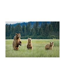 "Renee Doyle Alert Bears Canvas Art - 37"" x 49"""