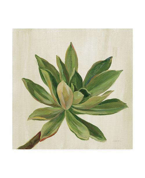 "Trademark Global Silvia Vassileva Front Yard Succulent I Canvas Art - 15"" x 20"""