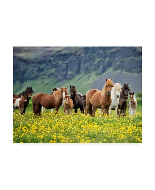 "Trademark Global PH Burchett Icelandic Horses VII Canvas Art - 37"" x 49"""