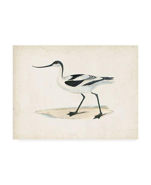 "Trademark Global Morris Morris Sandpiper IV Canvas Art - 19.5"" x 26"""