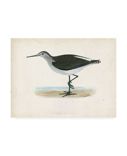 "Trademark Global Morris Morris Sandpiper VI Canvas Art - 36.5"" x 48"""