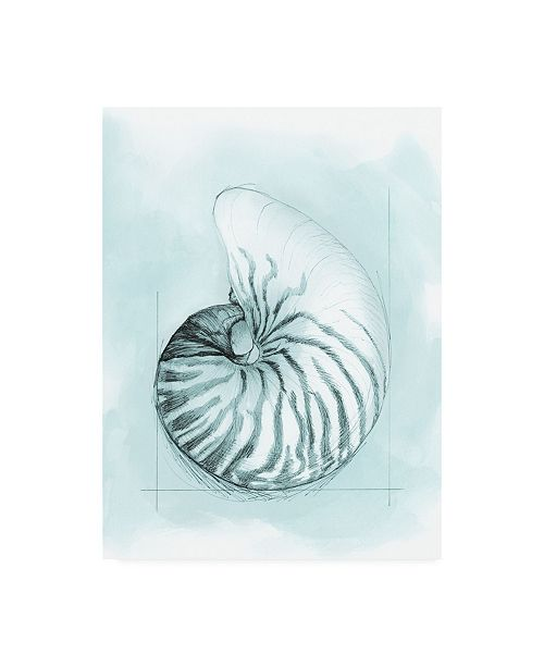 "Trademark Global Megan Meagher Coastal Shell Schematic II Canvas Art - 19.5"" x 26"""