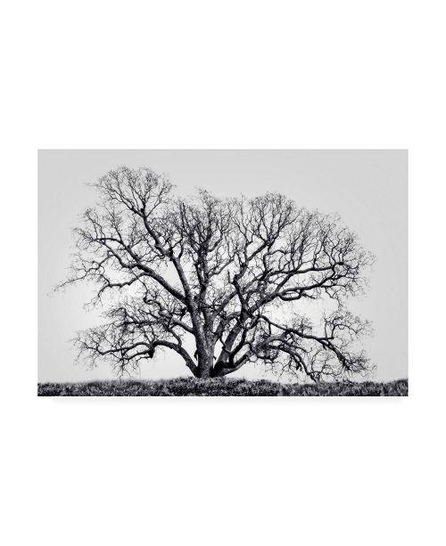 "Trademark Global Rachel Perry Still Life Canvas Art - 36.5"" x 48"""