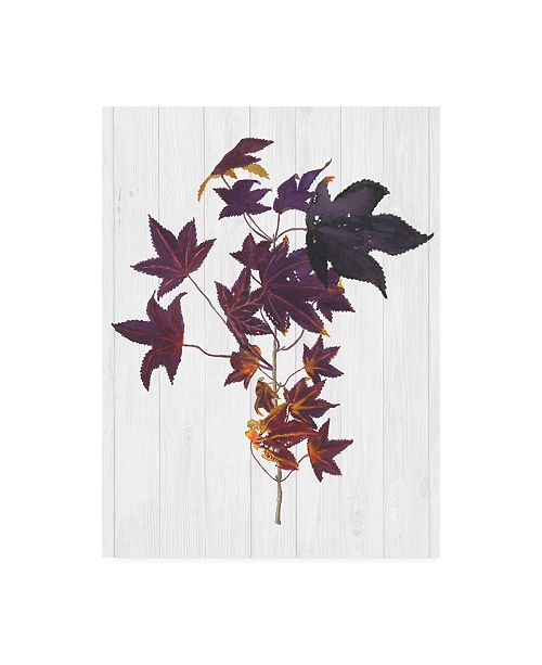"Trademark Global Dianne Miller Floral Canvas Art - 19.5"" x 26"""