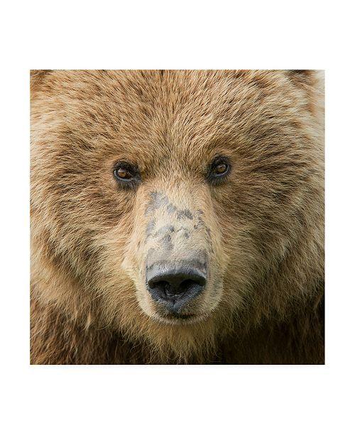 "Trademark Global PH Burchett Bear Life I Canvas Art - 15.5"" x 21"""