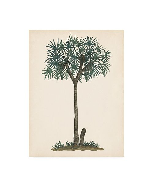 "Trademark Global Melissa Wang Palm Tree Study III Canvas Art - 36.5"" x 48"""