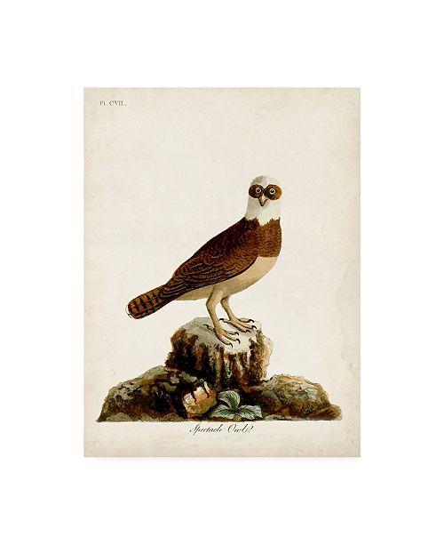 "Trademark Global John Latham Spectacle Owl Canvas Art - 19.5"" x 26"""