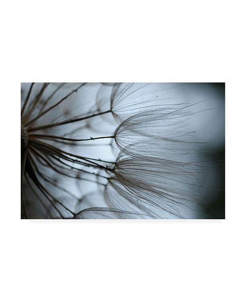"Trademark Global Renee W. Stramel Macro Dandelion X Canvas Art - 19.5"" x 26"""