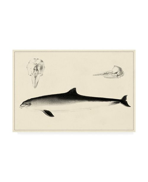 """Trademark Global Unknown Antique Dolphin Study II Canvas Art - 19.5"""" x 26"""""""