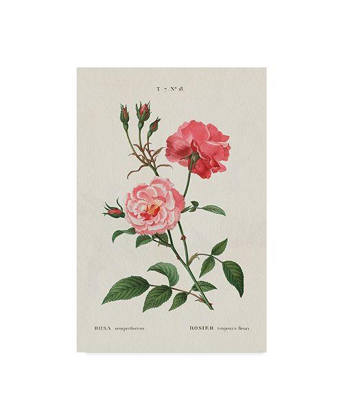 "Trademark Global Wild Apple Portfolio Rosa Canvas Art - 15"" x 20"""