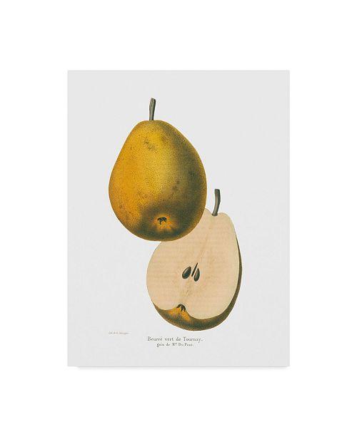 """Trademark Global Wild Apple Portfolio Tournay on White Canvas Art - 20"""" x 25"""""""