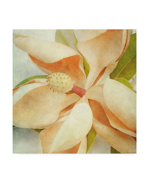 "Trademark Global Honey Malek Vintage Magnolia I Canvas Art - 15"" x 20"""