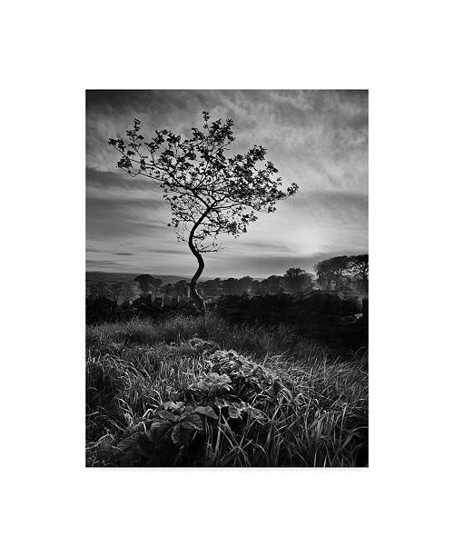 "Trademark Global Martin Henson Curved Tree Canvas Art - 20"" x 25"""