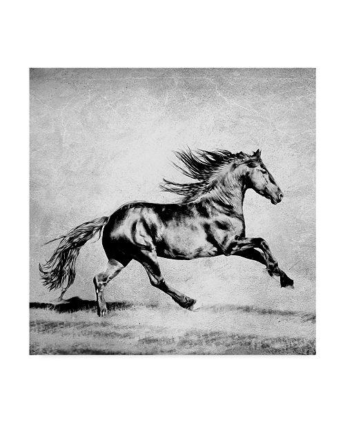 "Trademark Global PH Burchett Black and White Horses II Canvas Art - 15"" x 20"""
