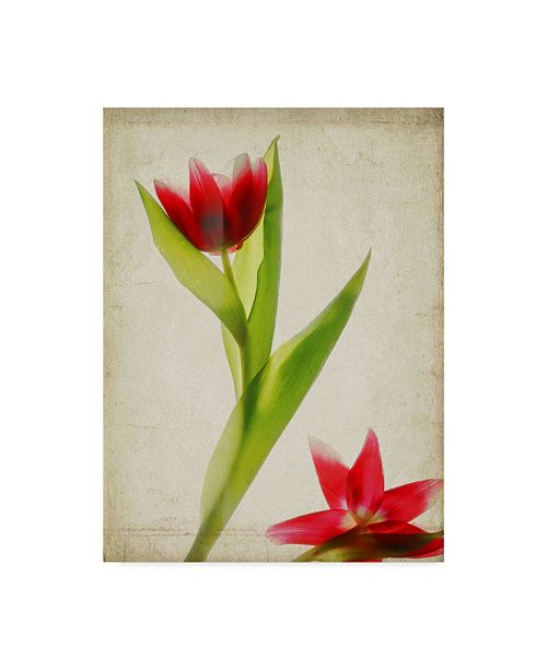 "Trademark Global Judy Stalus Parchment Flowers II Canvas Art - 20"" x 25"""