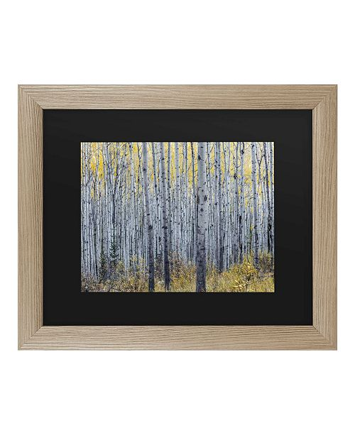 "Trademark Global Pierre Leclerc Forest of Aspen Trees Matted Framed Art - 27"" x 33"""