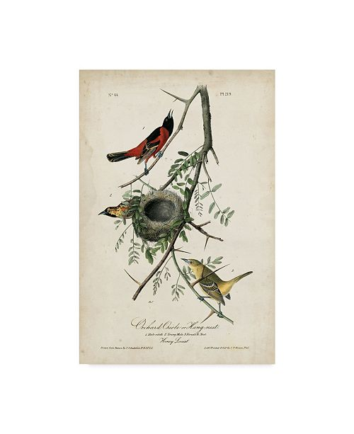 "Trademark Global John James Audubon Orchard Orioles Canvas Art - 37"" x 49"""