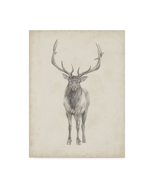 "Trademark Global Ethan Harper Elk Study Canvas Art - 20"" x 25"""