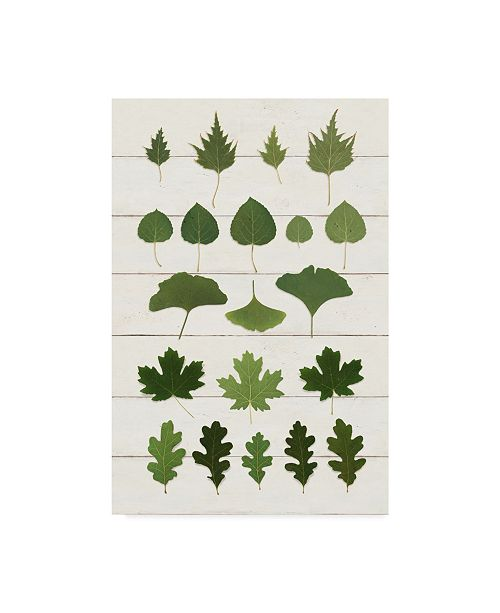 "Trademark Global Wild Apple Portfolio Leaf Chart I Shiplap Canvas Art - 37"" x 49"""