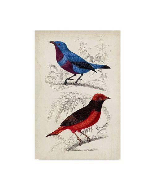 "Trademark Global M. Charles D'Orbigny D'Orbigny Birds II Canvas Art - 15"" x 20"""