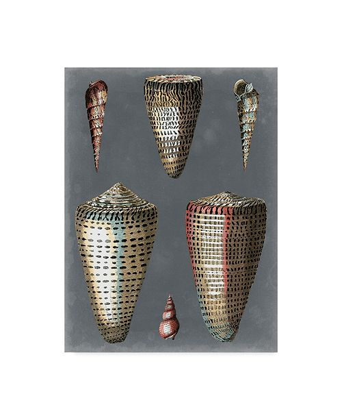 "Trademark Global Pierre Redoute Midnight Shells I Canvas Art - 20"" x 25"""
