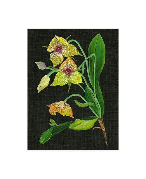 "Trademark Global Melissa Wang Telipogon Caulescens I Canvas Art - 15"" x 20"""