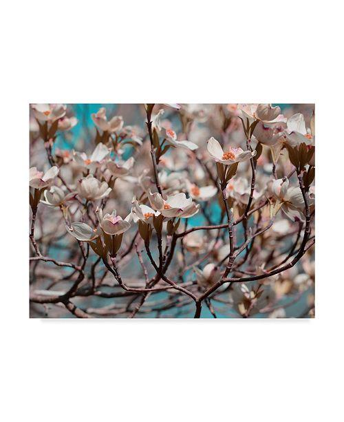 "Trademark Global Sharon Chandler Dogwood Spring I Canvas Art - 37"" x 49"""