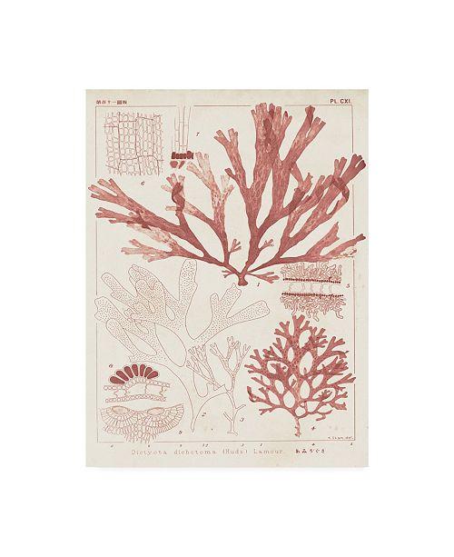 "Trademark Global Vision Studio Antique Coral Seaweed IV Canvas Art - 37"" x 49"""