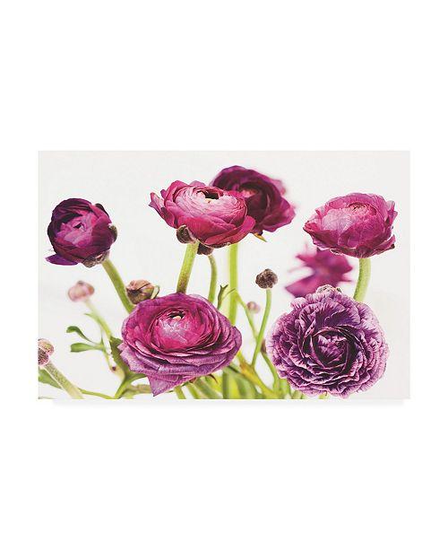 "Trademark Global Laura Marshall Spring Ranunculus III Canvas Art - 37"" x 49"""