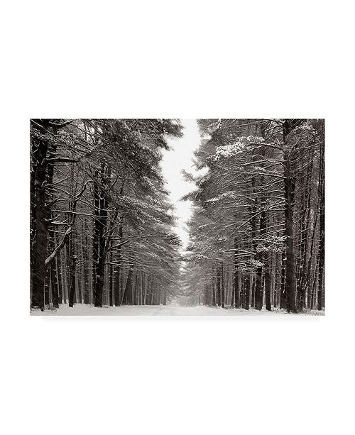 "Trademark Global James Mcloughlin A Snowy Walk IV Canvas Art - 20"" x 25"""