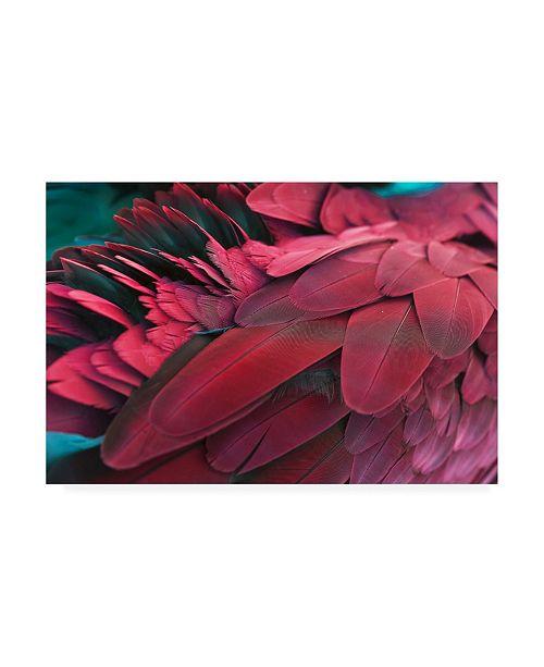 "Trademark Global PhotoINC Studio Feather Red Canvas Art - 27"" x 33.5"""