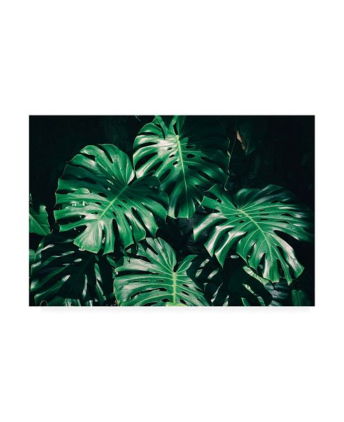 "Trademark Global PhotoINC Studio Tropical Green Palm Canvas Art - 19.5"" x 26"""