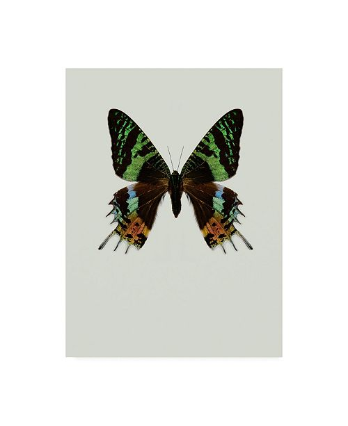 "Trademark Global Incado Chrysiridia rhipheus Canvas Art - 15.5"" x 21"""