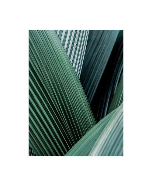 """Trademark Global Incado Close up I Tropic Canvas Art - 36.5"""" x 48"""""""