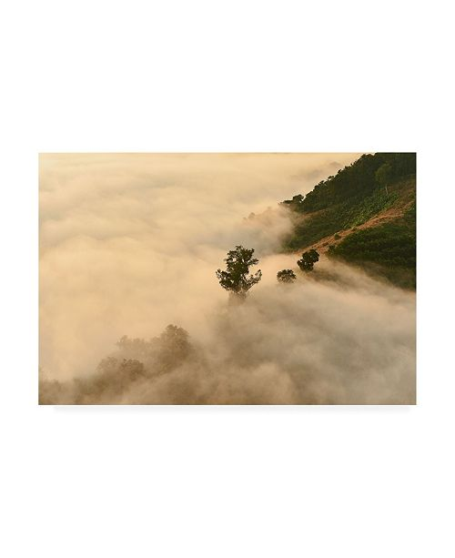 "Trademark Global PhotoINC Studio Clouds Trees Canvas Art - 15.5"" x 21"""
