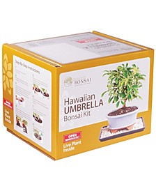 Brussels Bonsai Hawaiian Umbrella Bonsai Kit