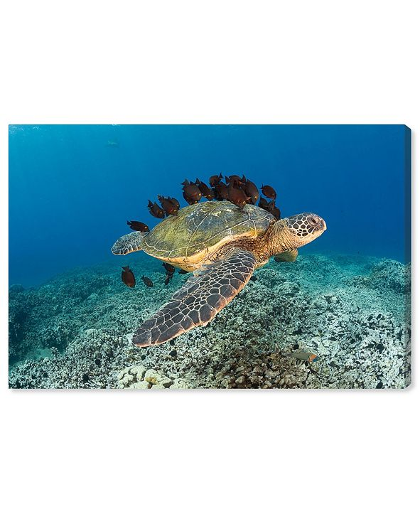 """Oliver Gal Sea Turtle and Fish by David Fleetham Canvas Art, 24"""" x 16"""""""